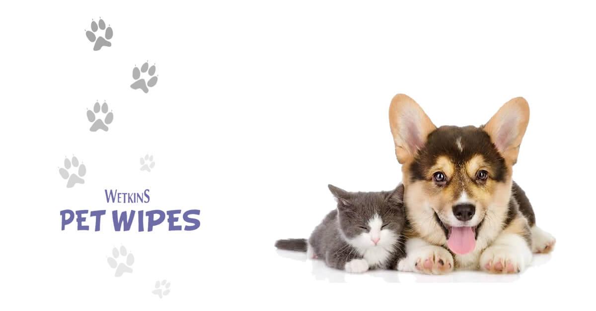 Hewan Peliharaan Bersih dan Segar dengan Wetkins Pet Wipes
